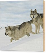 Wolves In Winter Wood Print