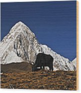 Yaks Grazing In A Himalayan Valley Wood Print