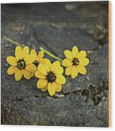 3 Yellow Flowers Wood Print by Aged Pixel
