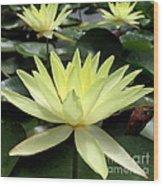 3 Yellow Lotus Wood Print