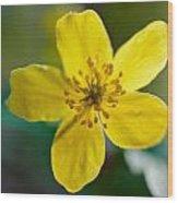 Yellow Wood Anemone Wood Print