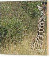 Young Giraffe In Kenya Wood Print