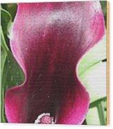 Zantedeschia Named Schwarzwalder Wood Print