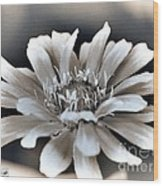 Zinnia From The Whirligig Mix Wood Print