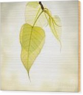 Pho Or Bodhi Wood Print