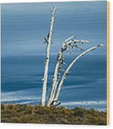 30914-37 A Harsh Climate Wood Print