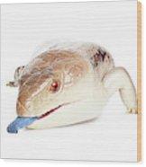 Australian Reptiles On White Wood Print