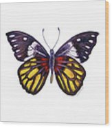 31 Delias Henningia Butterfly Wood Print