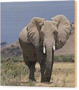 Elephant Dafrique Loxodonta Africana Wood Print