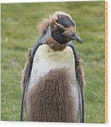 King Penguin Wood Print