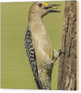 Usa, Texas, Hidalgo County Wood Print