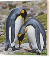 King Penguins Wood Print