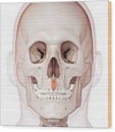 Human Facial Muscles Wood Print