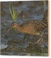 King Rail In A Wetland Wood Print
