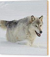 Wolf In Winter Wood Print