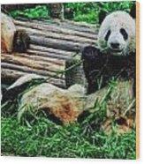 3722-panda -  Acanthus Sl Wood Print