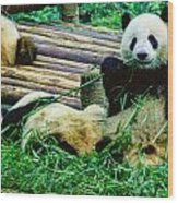 3722-panda -  Colored Photo 1 Wood Print