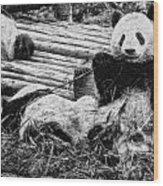 3722-panda -  Graphite Drawing 2 Sl Wood Print