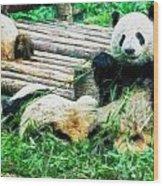 3722-panda -  Oil Stain Sl Wood Print