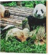 3722-panda -  Watercolor 1 Wood Print