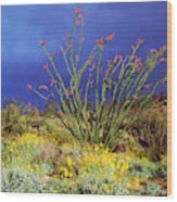 Usa, California, Anza-borrego Desert Wood Print