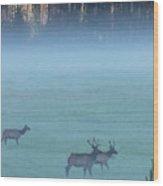 Usa, Colorado, Rocky Mountain National Wood Print