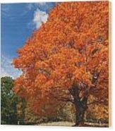 A Blanket Of Fall Colors Wood Print