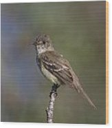 Alder Flycatcher Wood Print