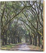 Allee Of Oaks Road Wood Print