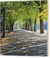 Alley With Falling Leaves In Fall Park Wood Print