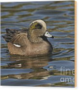 American Widgeon Wood Print