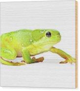 Amphibians On White Wood Print
