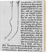 Anton Van Leeuwenhoek Wood Print