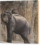 Asian Elephant Wood Print