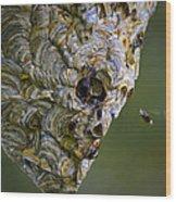 Bald-faced Hornet Nest Wood Print