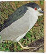 Black-crowned Night-heron Wood Print