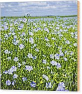 Blooming Flax Field Wood Print