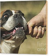 Boxer Dog Wood Print by Jean-Michel Labat