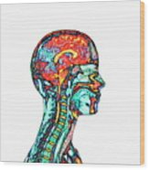 Brain And Spinal Cord Wood Print