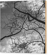 Branches And Clouds Wood Print
