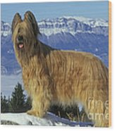 Briard Dog Wood Print by Jean-Michel Labat
