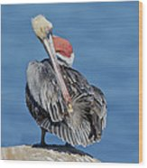 Brown Pelican Preening Wood Print