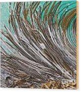 Bull Kelp Blades On Surface Background Texture Wood Print