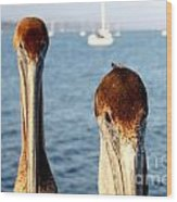 California Pelicans Wood Print