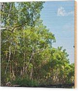 Caroni Swamp Wood Print