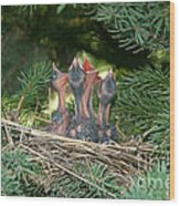 Cedar Waxwings Wood Print by Linda Freshwaters Arndt