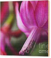 Christmas Cactus In Bloom Wood Print