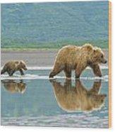 Coastal Brown Bear Pictures Wood Print