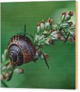 Copse Snail Wood Print