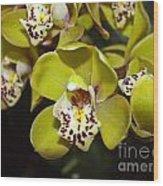 Cymbidium Orchid Wood Print